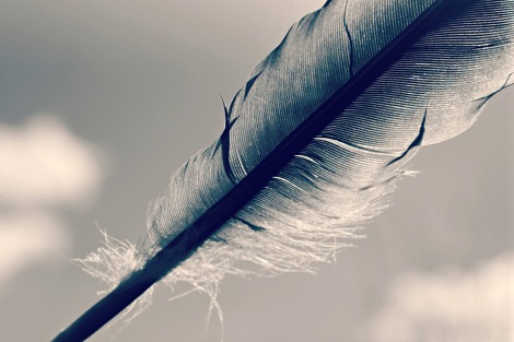 feather-4106529_1920