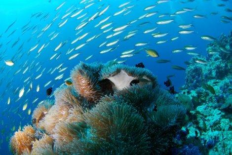 diving-689825_1280